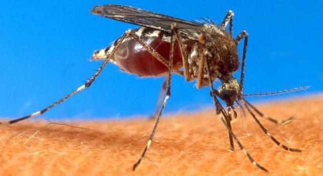 Anvisa autoriza uso de primeira vacina contra dengue no país